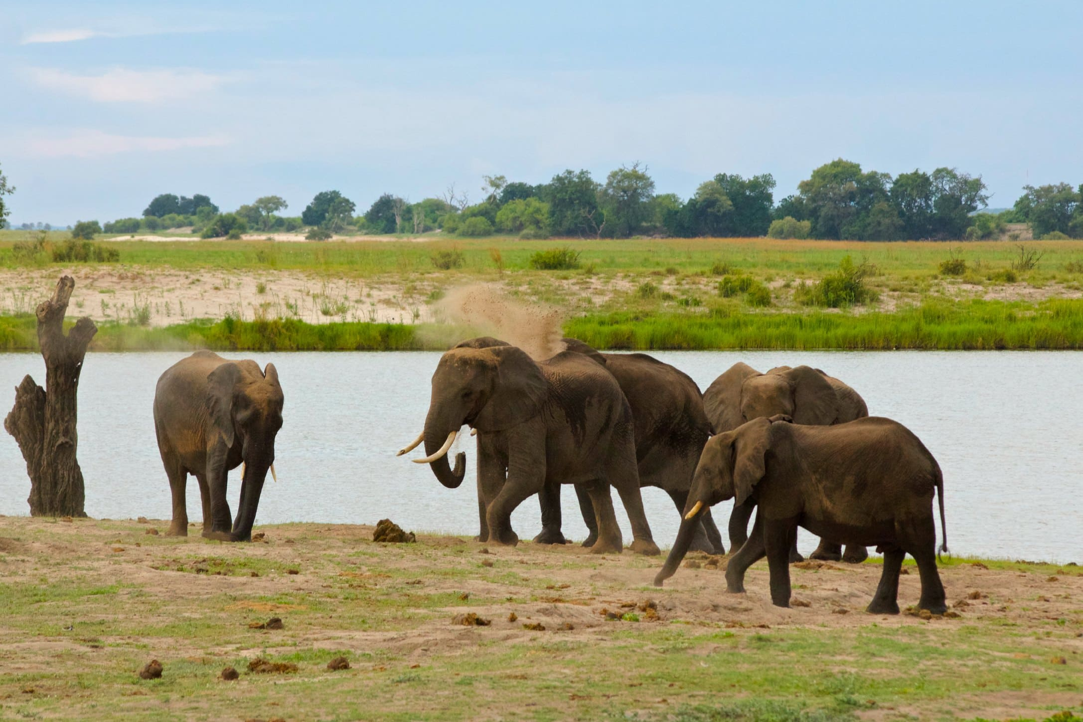 Game Drive: Chobe National Park