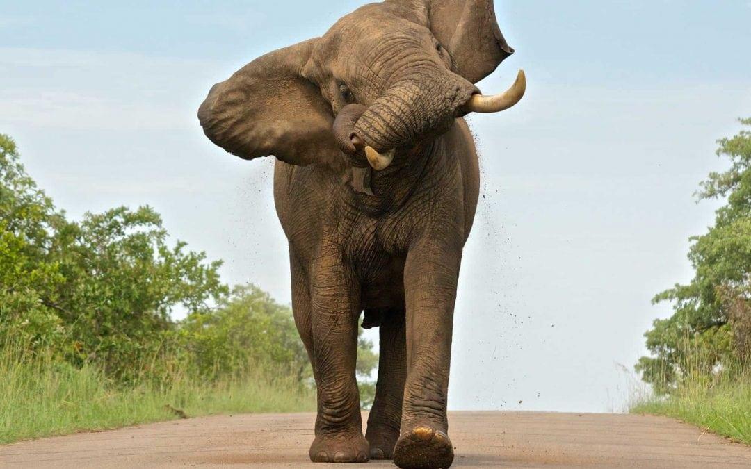 Kruger National Park: Day 1
