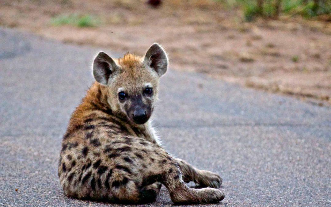 Kruger National Park: Day 2