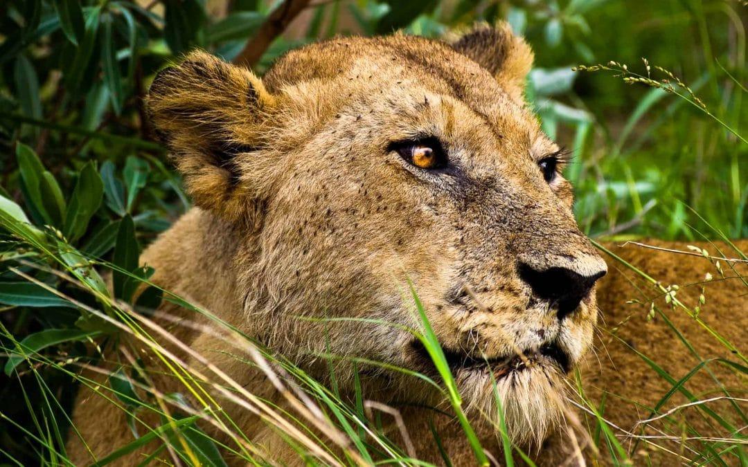 Kruger National Park: Day 3