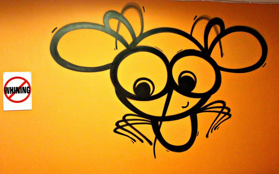 Mosquito Hostel: The Hostel You Must Not Miss In Europe