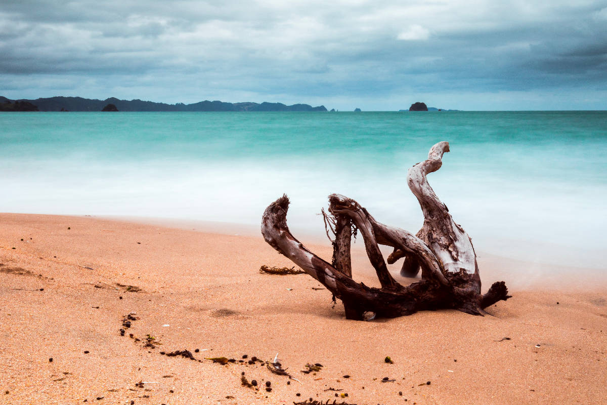 a piece of driftwood lies in the foreground on orange sand; there is smooth ocean water in the background
