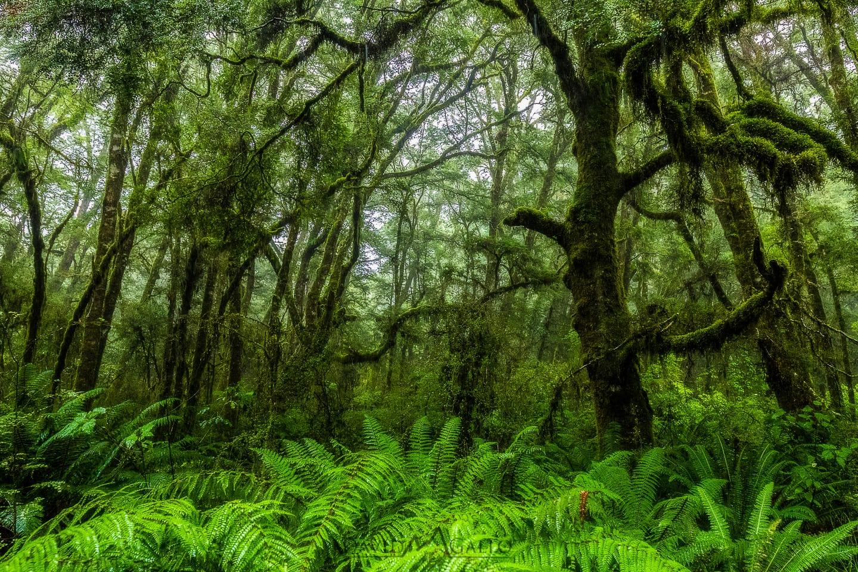 green moss-covered beech forest