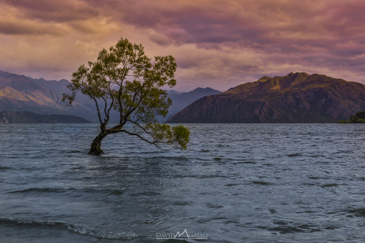 Looking for a relaxing day in Wanaka? Check out the Wanaka Tree, Mt. Aspiring, and Waterfall Creek! Looking for a lodge with mountain views? Check out YHA! Read more at www.thefivefoottraveler.com