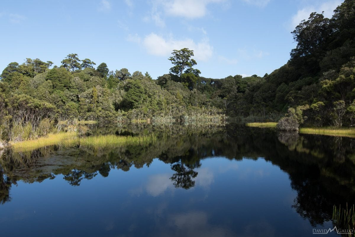 trees reflect in the lake