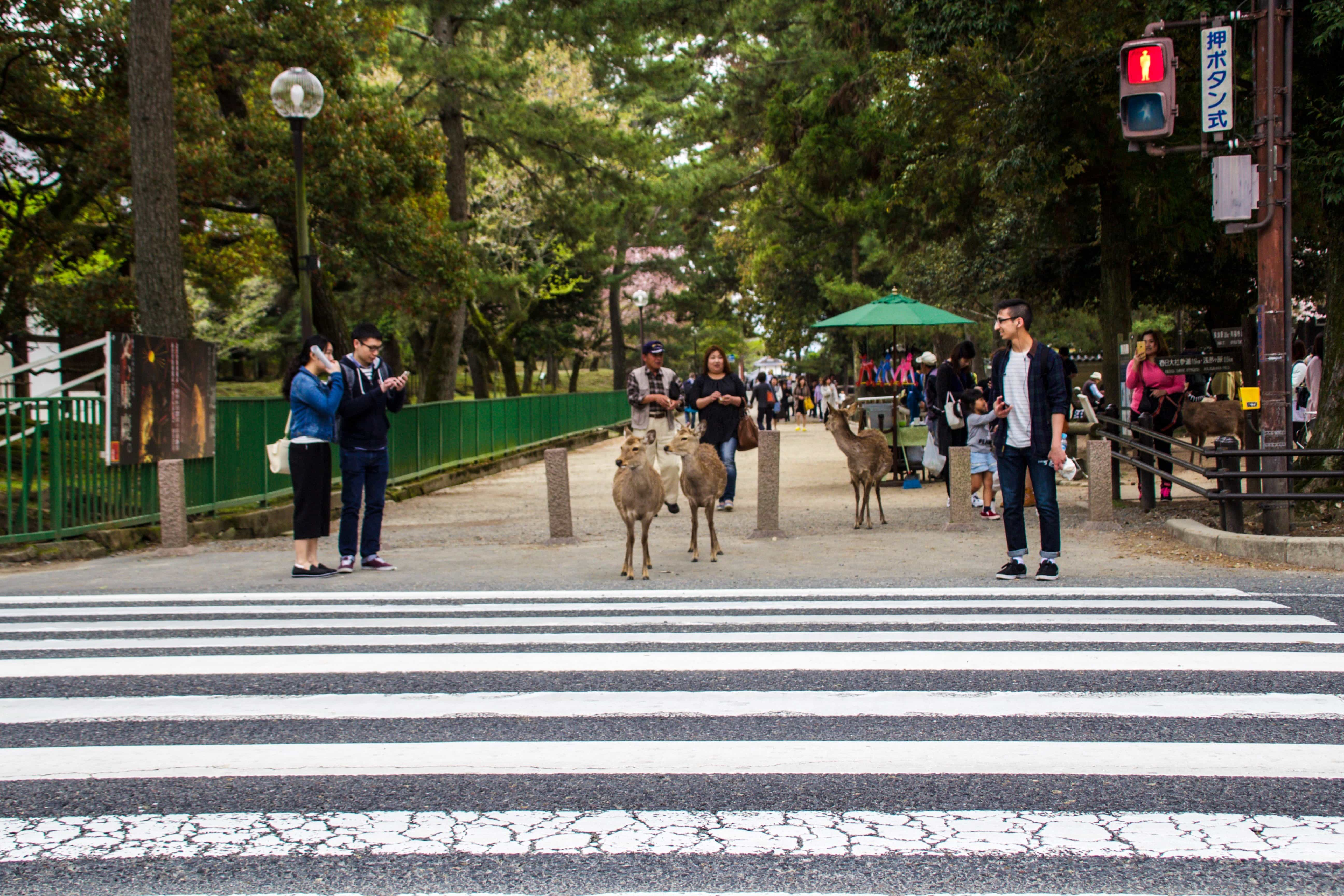 Nara is a very easy day trip for those visiting Japan, as it's located less than an hour from Osaka and Kyoto. Here are 5 things to do in Nara...Read more at www.thefivefoottraveler.com