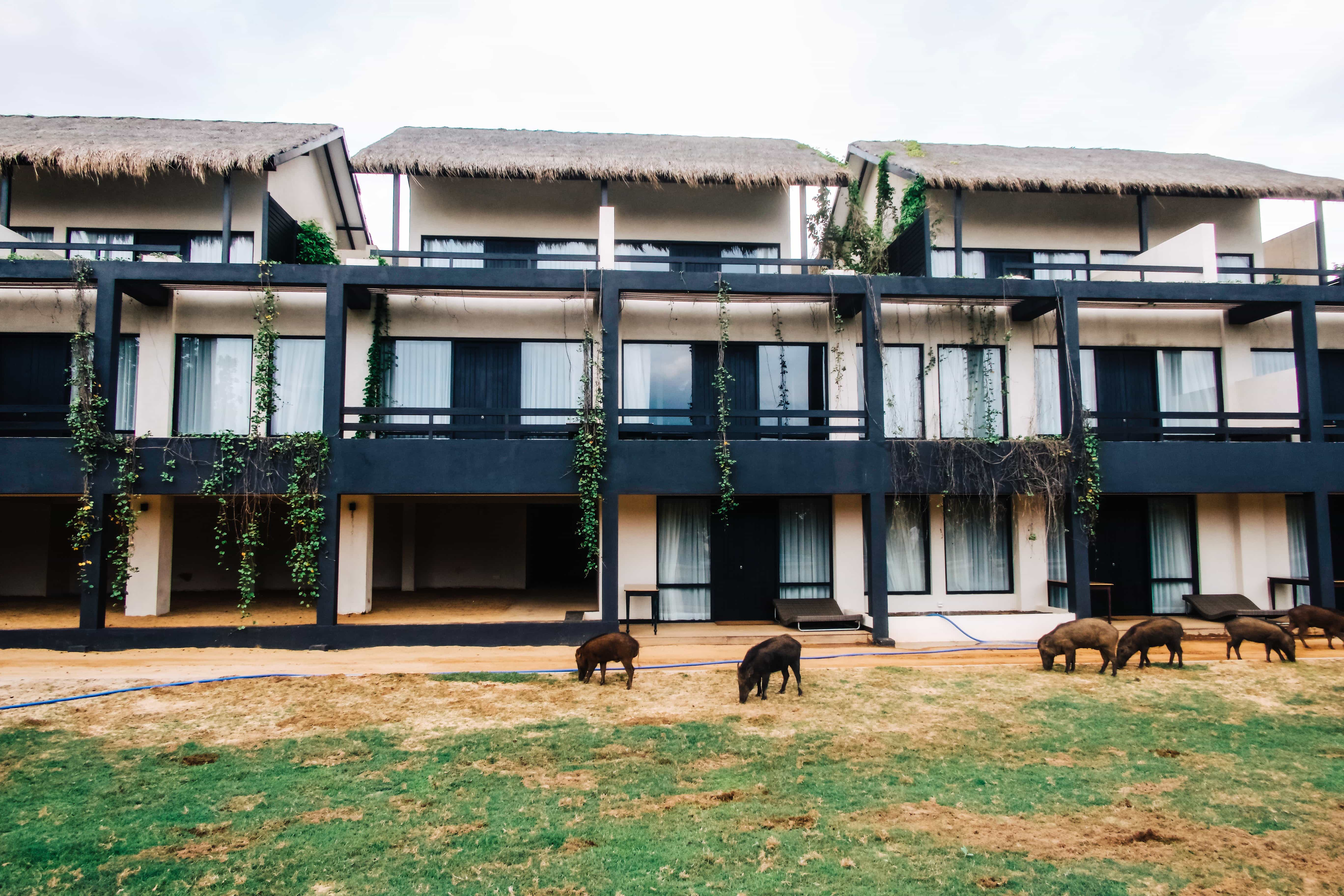 When we found out that there was a luxury hotel situated in the heart of Yala National Park, where wild animals roam free, we just had to stay at the Jetwing Yala. You can easily spend a week at Jetwing Yala basking in relaxation or venturing greater into the National Park in search of more wildlife. Read more at www.thefivefoottraveler.com