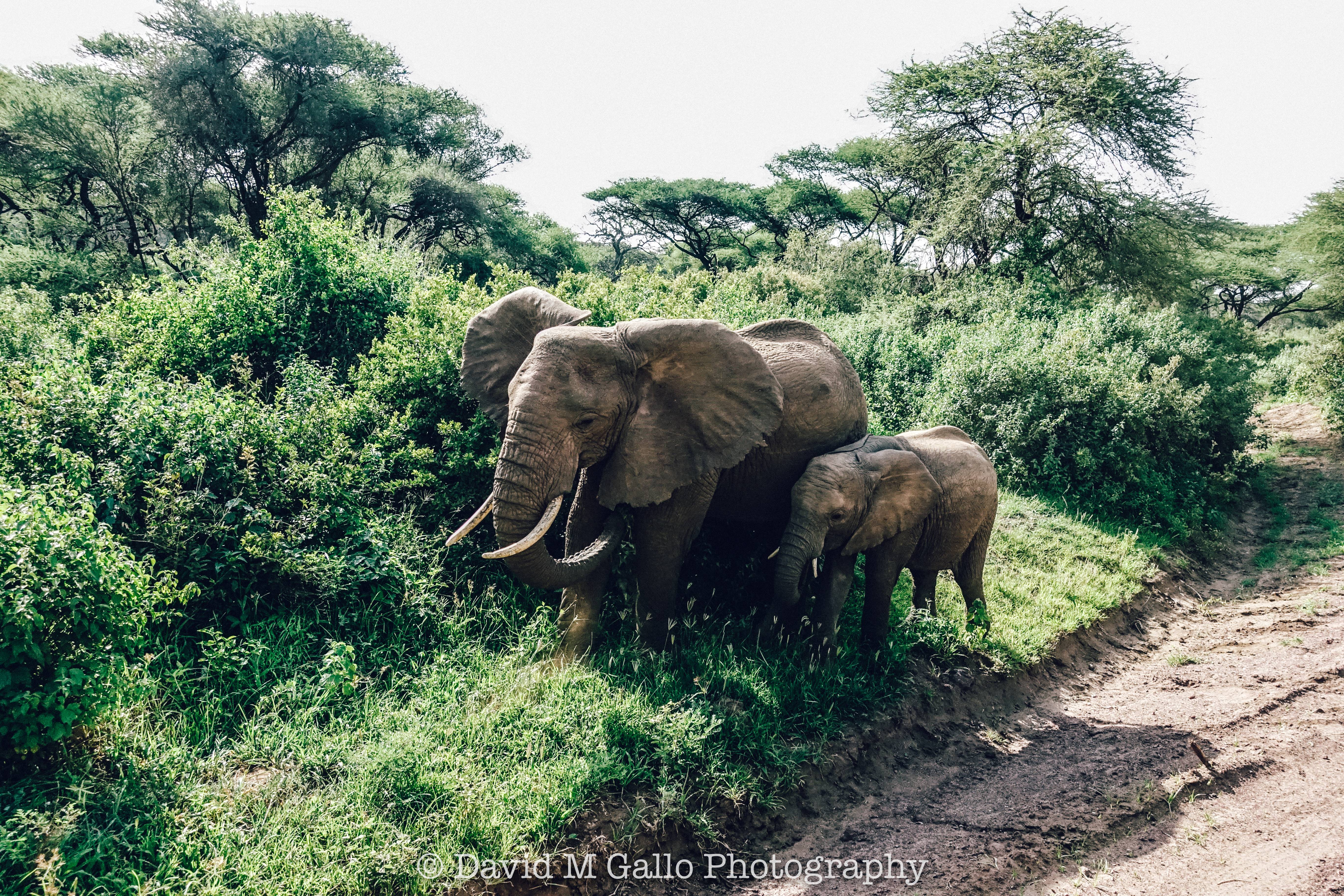 There's something special about the very first time you see wild animals in their natural habitat -- it's truly unforgettable! We had a fantastic game drive through Lake Manyara on our first day with Pristine Trails. Read more at thefivefoottraveler.com