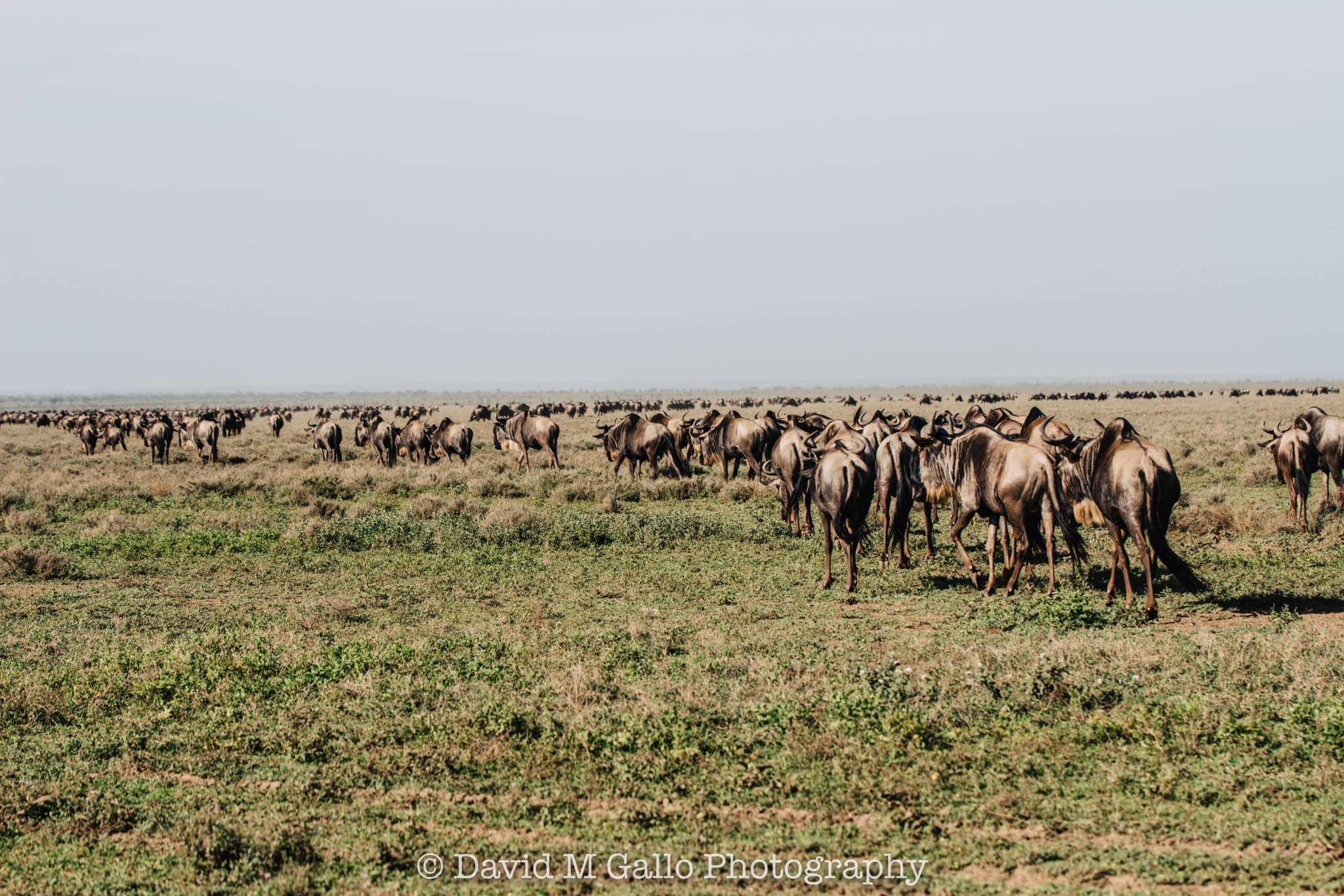 Sizing up the Serengeti – Day 1
