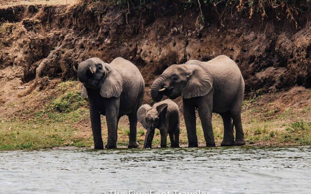 A River Safari down the Kazinga Channel