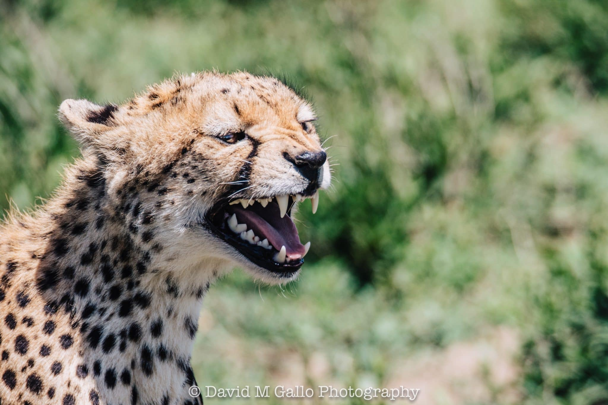 Sizing up the Serengeti – Day 2