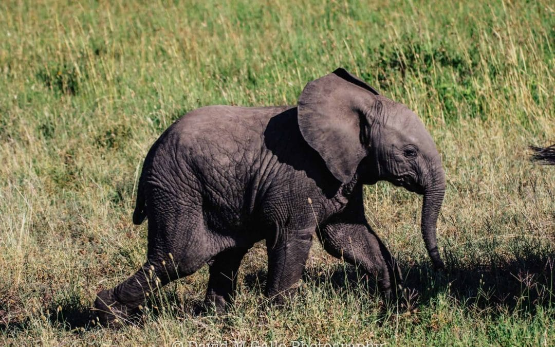 Everyone Should Walk On The African Wild Side, And You Could Help Them Do It