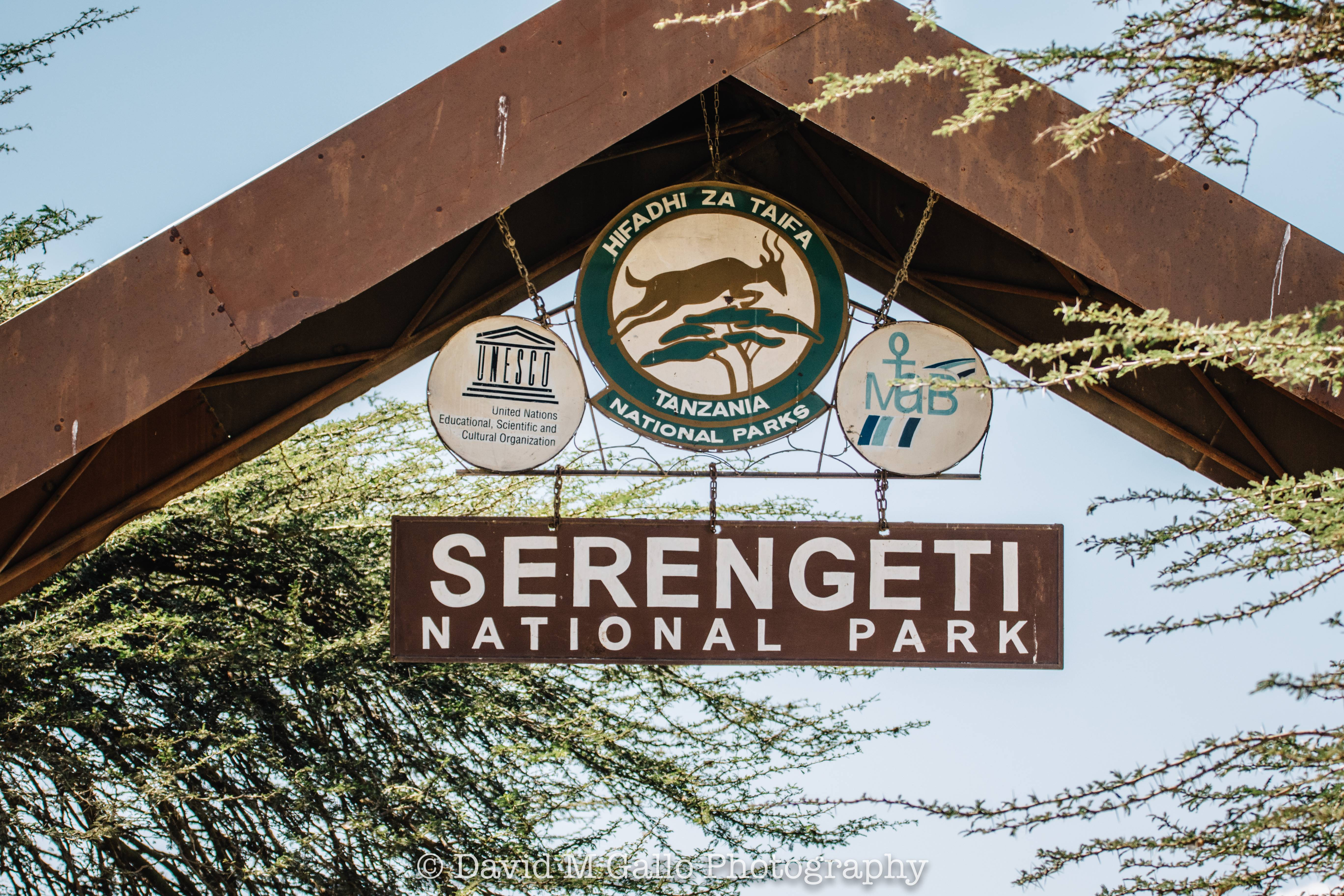 The Serengeti is easily Africa's most famous National Park. On our second day with Pristine Trails we drove in our open-air vehicle through the vast plains of Tanzania while witnessing the Great Migration. Read more at thefivefoottraveler.com