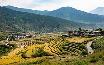 Palaces or Phalluses?   Bhutan