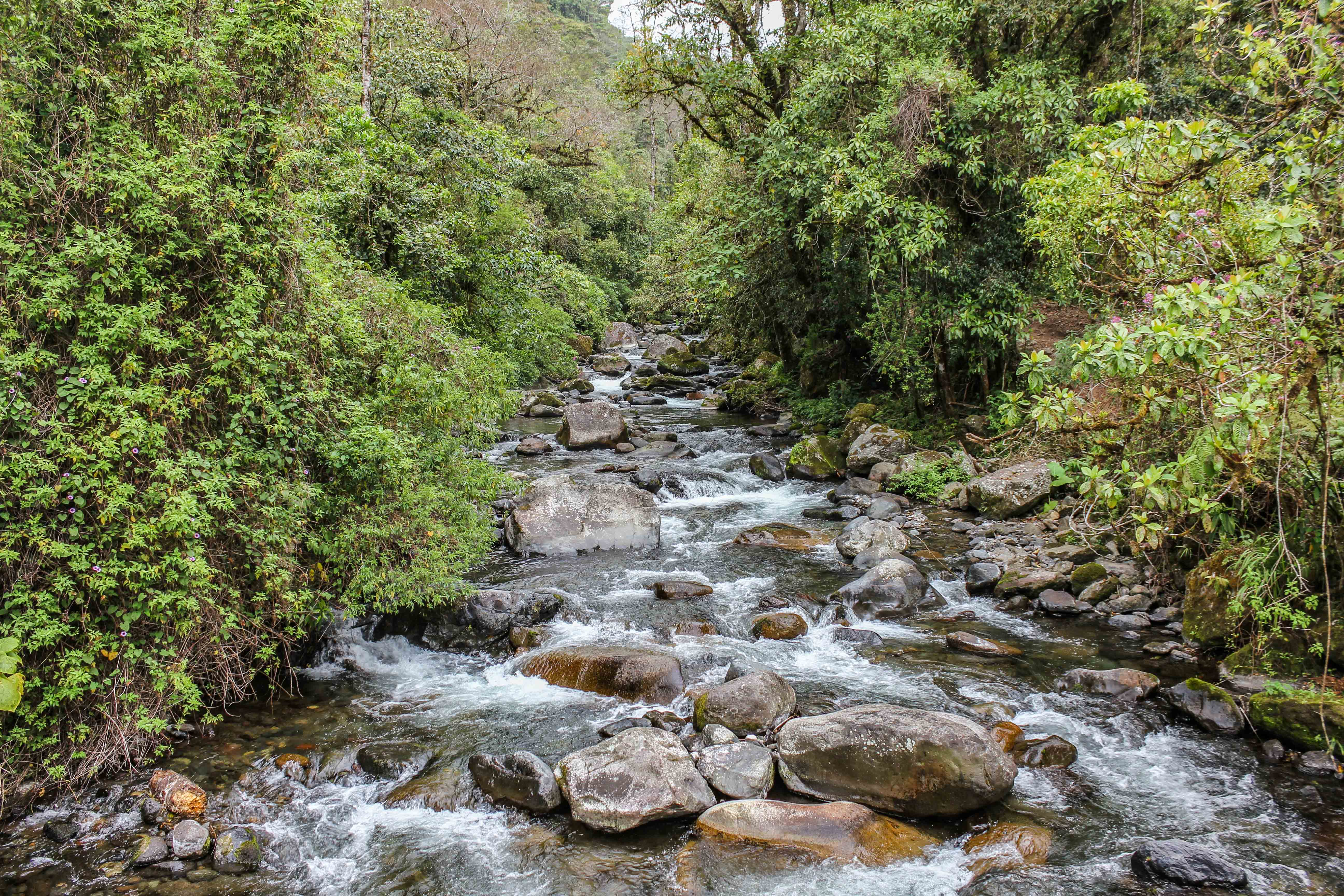 water rapids in boquete panama