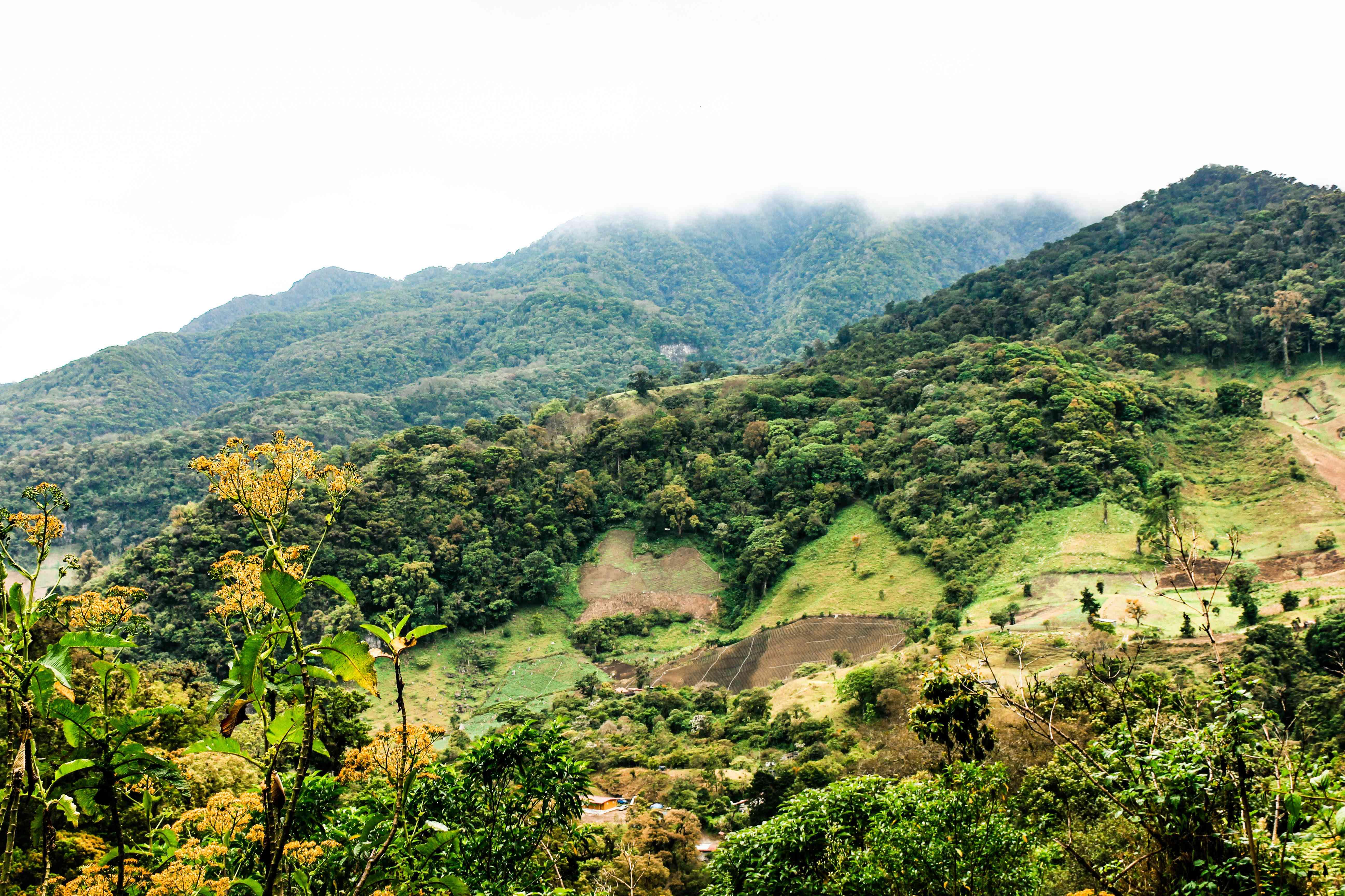 boquete scenery
