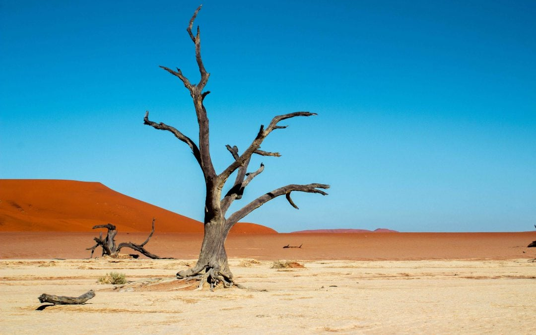 12 Incredible Things To Do In Namibia