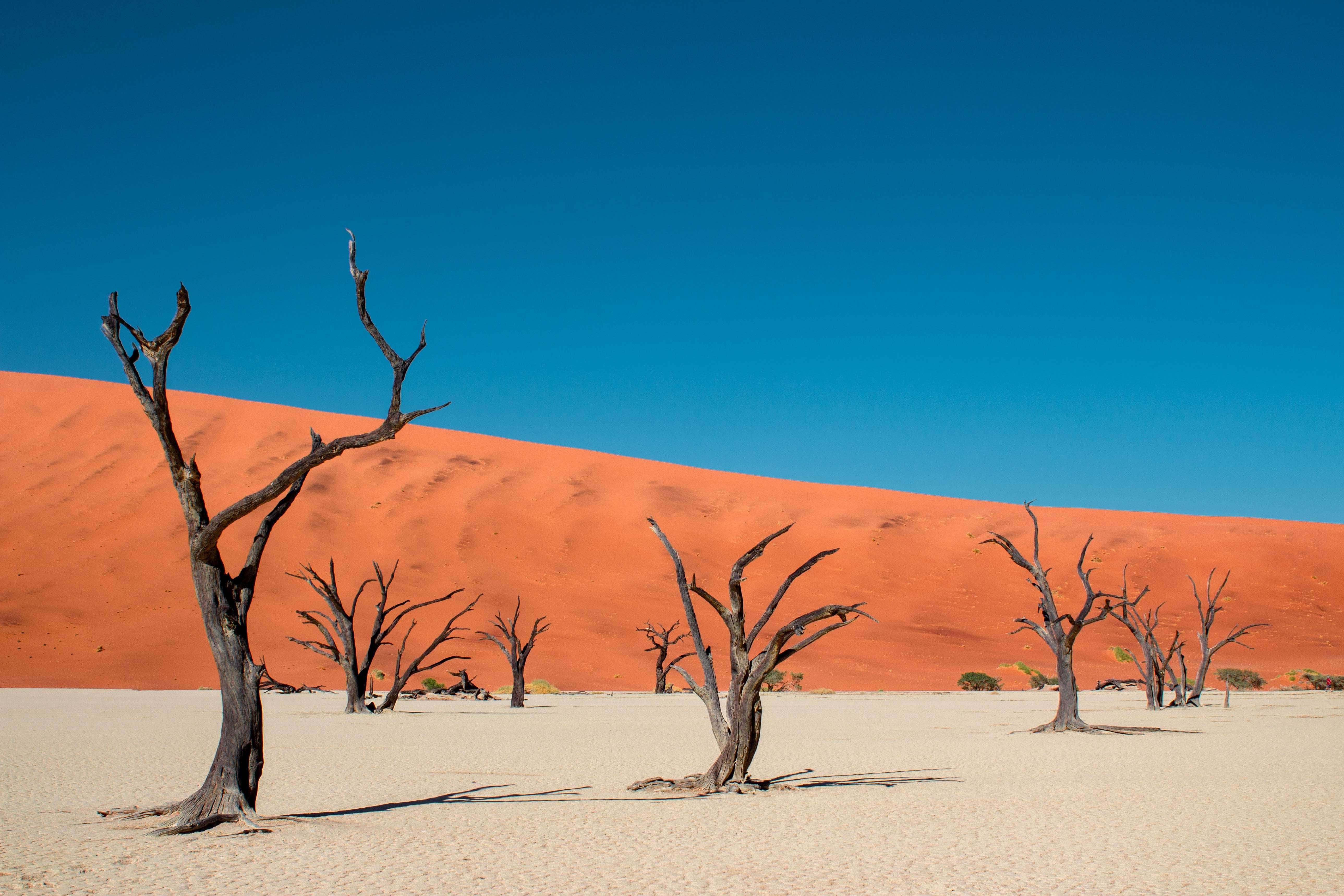 dead acacia trees in namibia on a white salt pan juxtaposed against orange sand dune