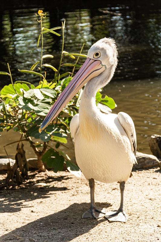 a bird in australia